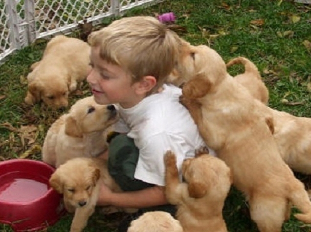 special-needs-dogs.jpg